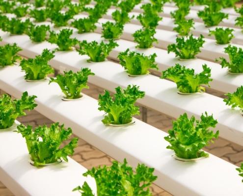 Subvenciones hasta 50% para la transformación, comercialización o desarrollo de nuevos productos agrícolas en Andalucía